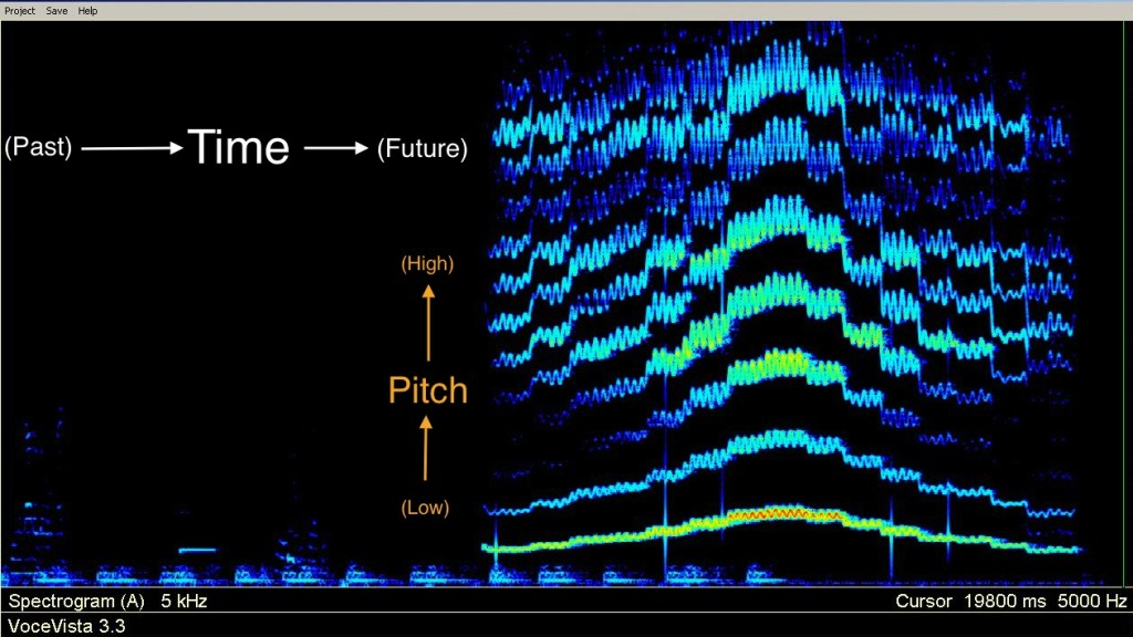 <strong>Figure 1.</strong>On a spectrogram, time moves from left to right, and pitch (low to high) from bottom to top, just like printed music. (This is a female singing [i] from E4-E5-E4.)